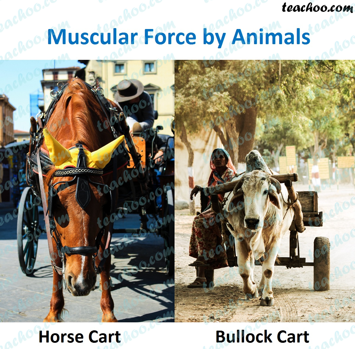 muscular-force-by-animals.jpg