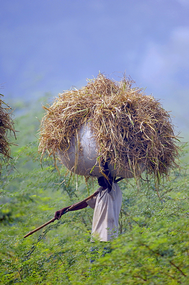 Person holds a bundle of hay over his head.jpg