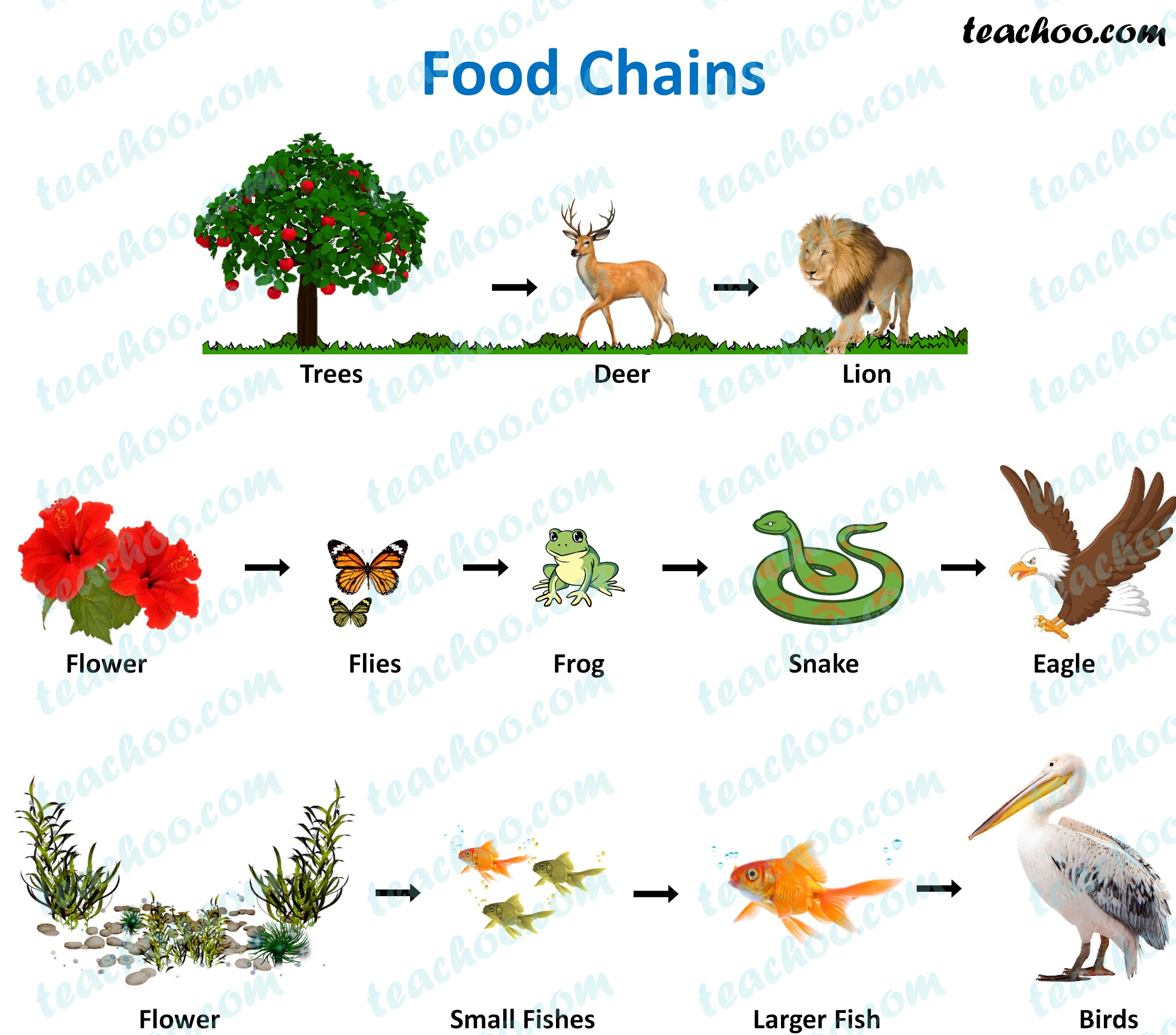 Food Chain and Food Web - Meaning, Diagrams, Examples - TeachooTeachoo