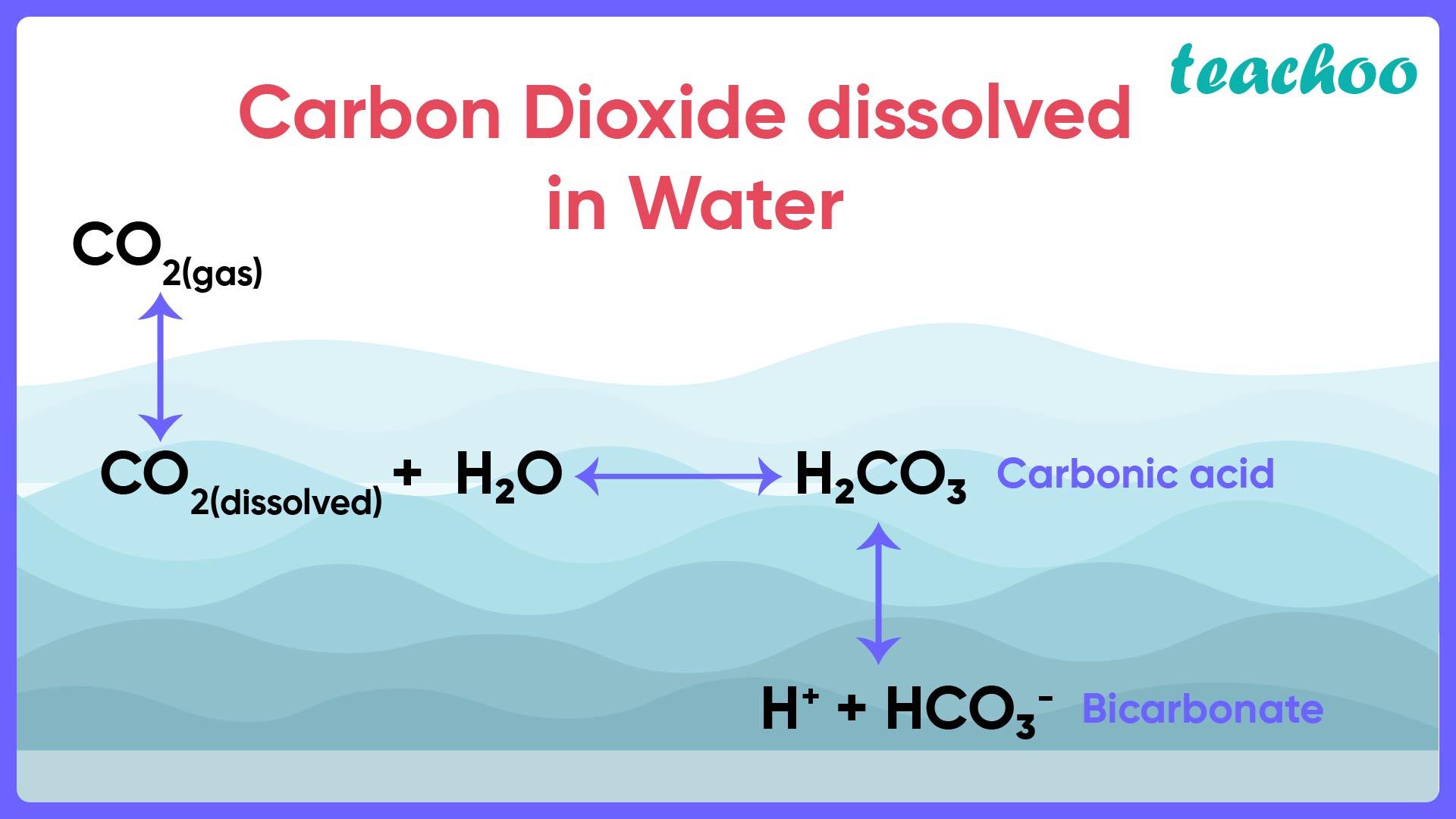 Carbon Dioxide dissolved - Teachoo-01.jpg