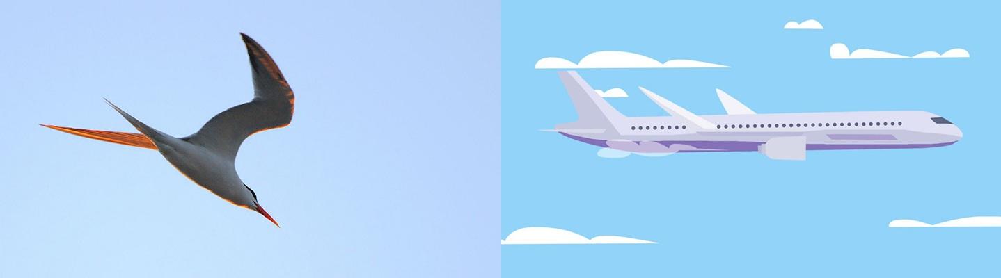 Bird and Aeroplane.jpg