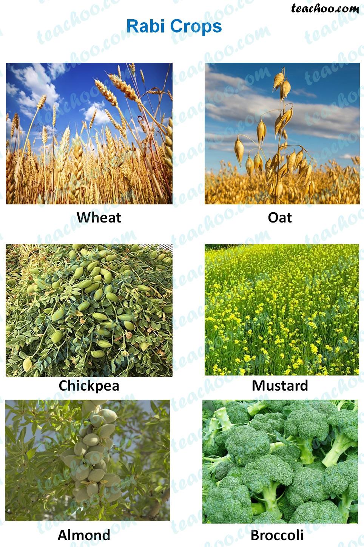 rabi-crops---examples.jpg