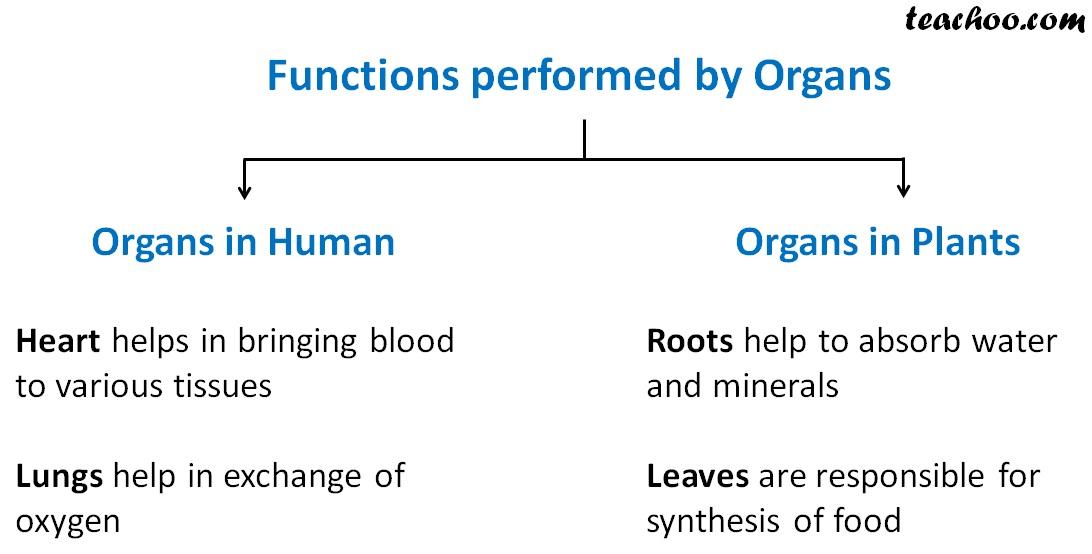 Functions performed by organs - Teachoo.jpg