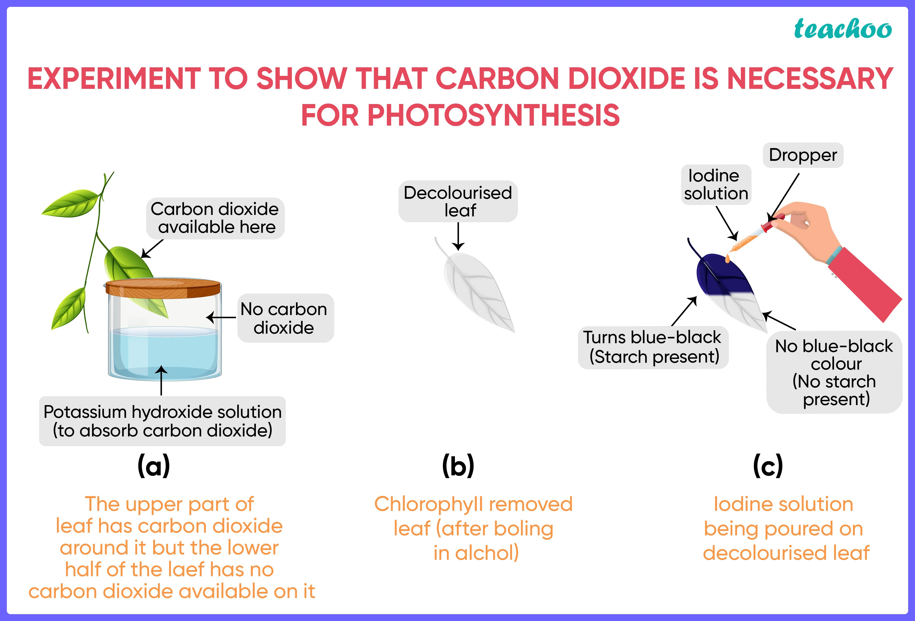 Carbon dioxide is necessary for photosynthesis-01.jpg