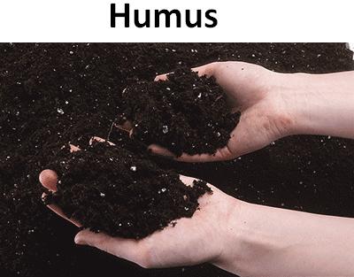 Humus.png