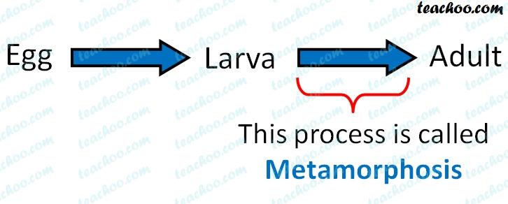 metamorphosis---teachoo.jpg
