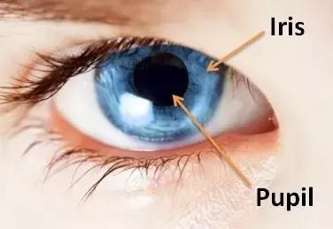 Iris and Puplil - Real life image.jpg