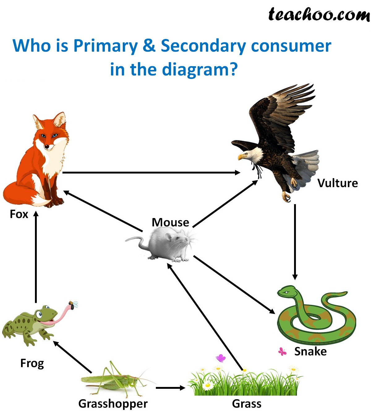 Who are Primary & Secondary consumers in this diagram - Teachoo.jpg