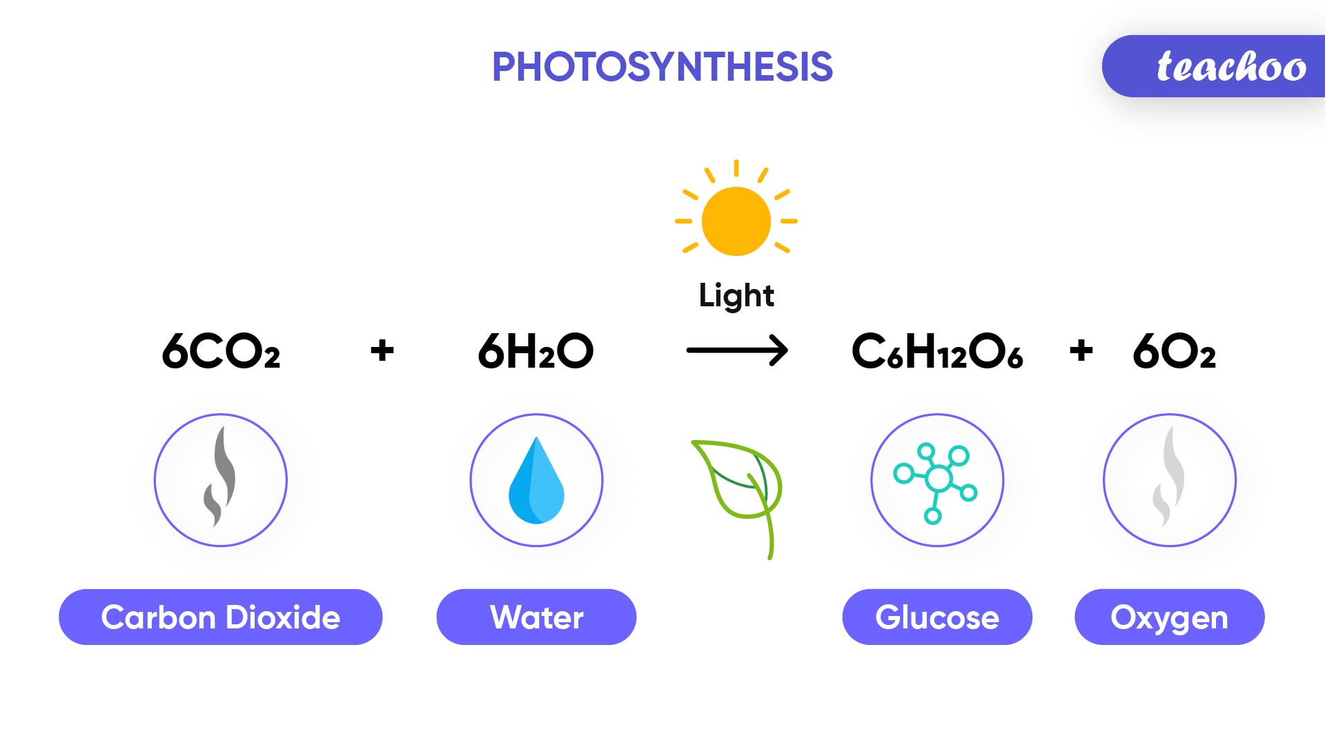 Photosynthesis-Teachoo-01.jpg