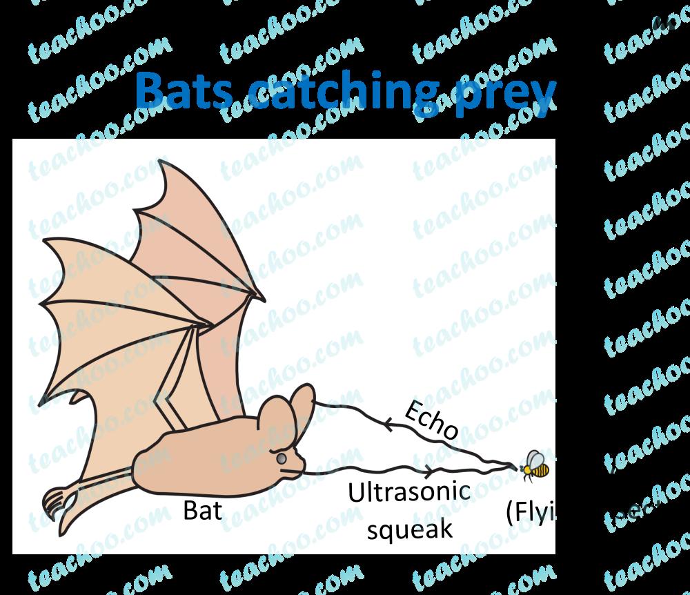 bats-catching-prey.png