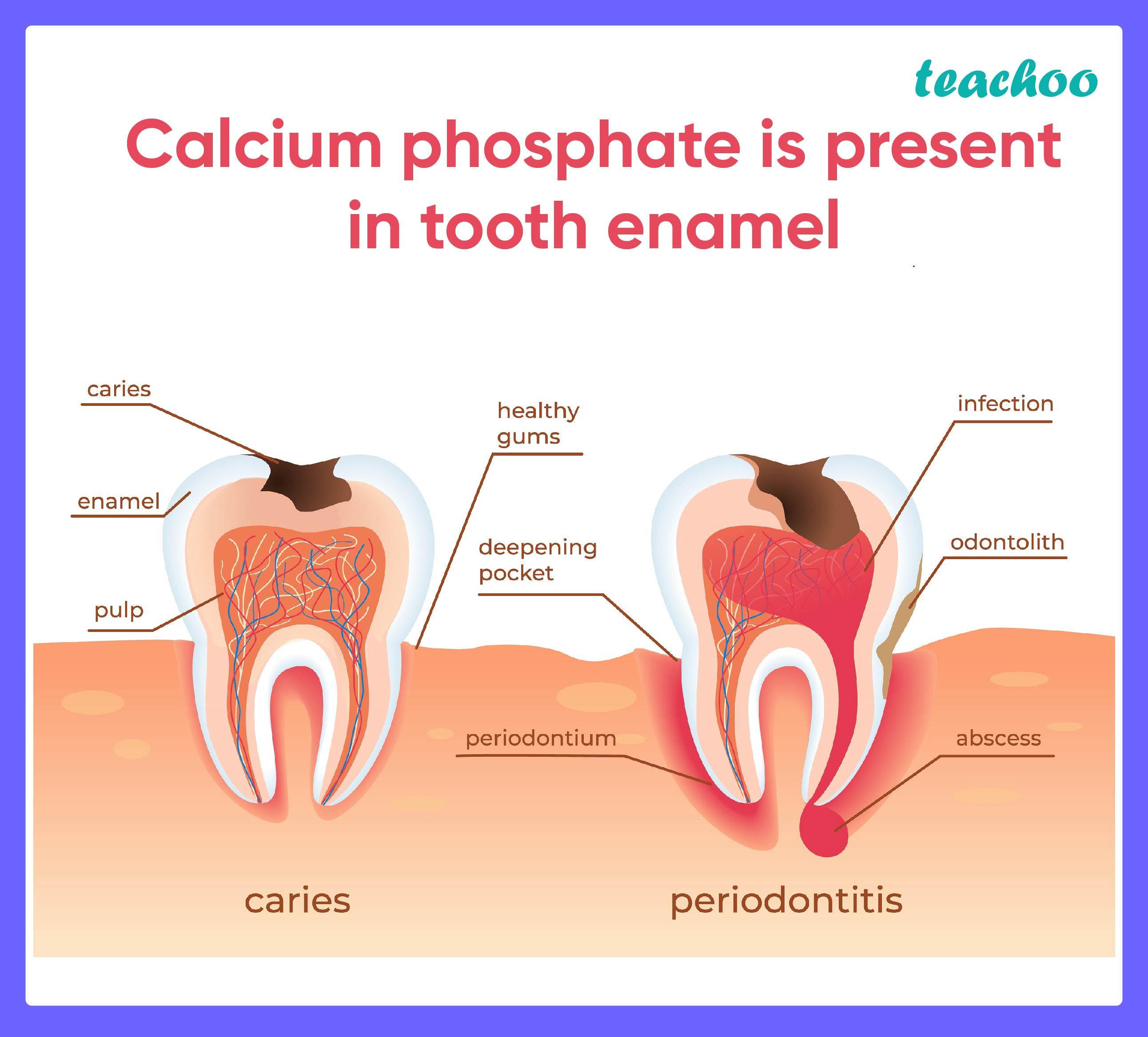 Calcium phosphate is present in tooth enamel - Teachoo-01.jpg