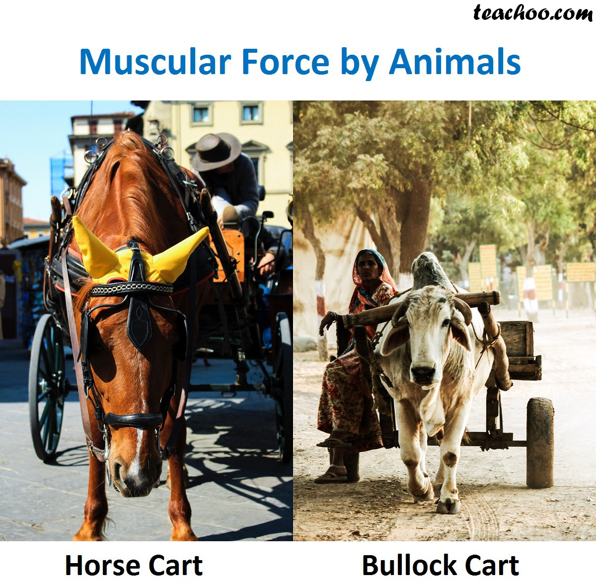 Muscular force by animals.jpg