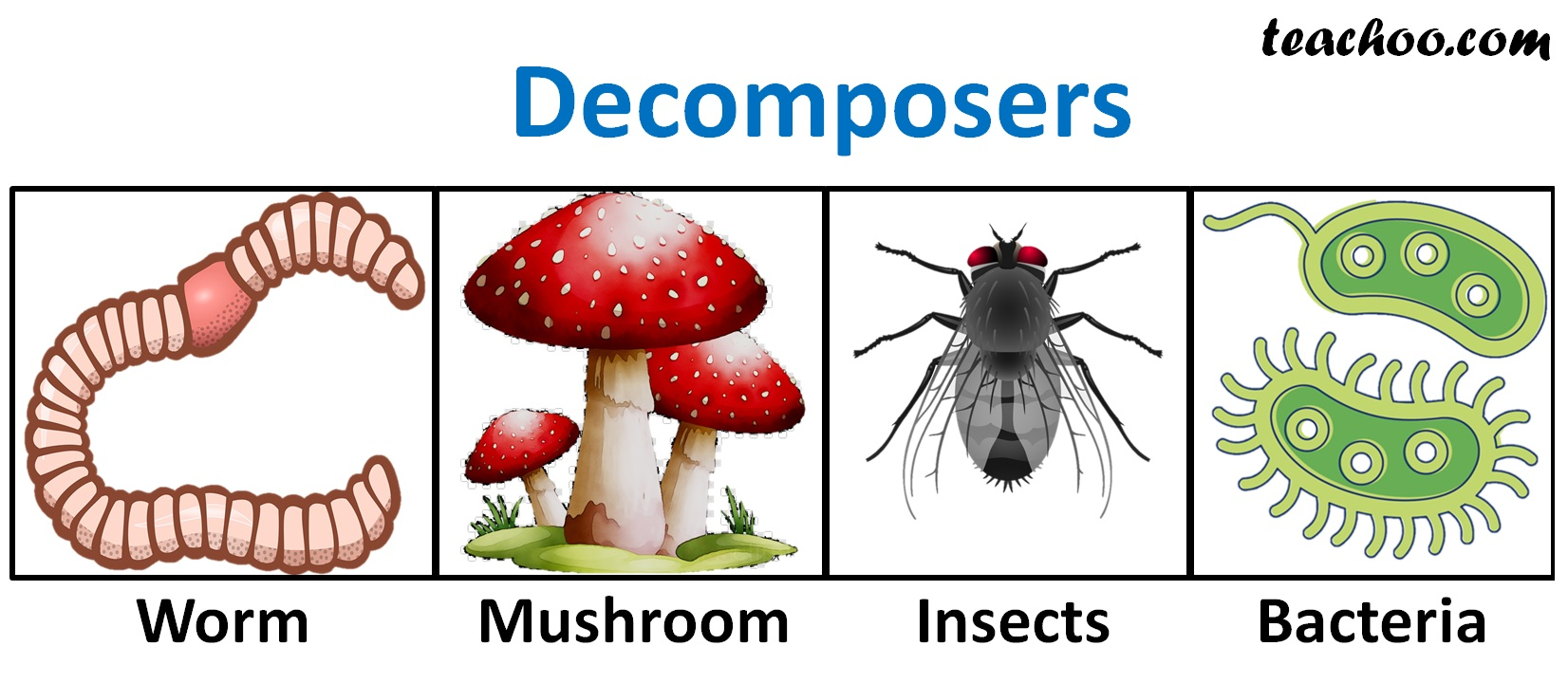 Decomposers - Teachoo.jpg
