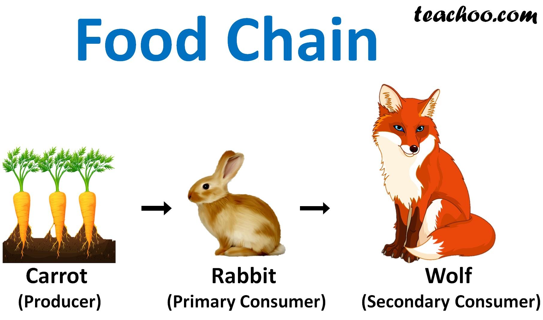 Food Chain Ncert Q4 - Teachoo.jpg