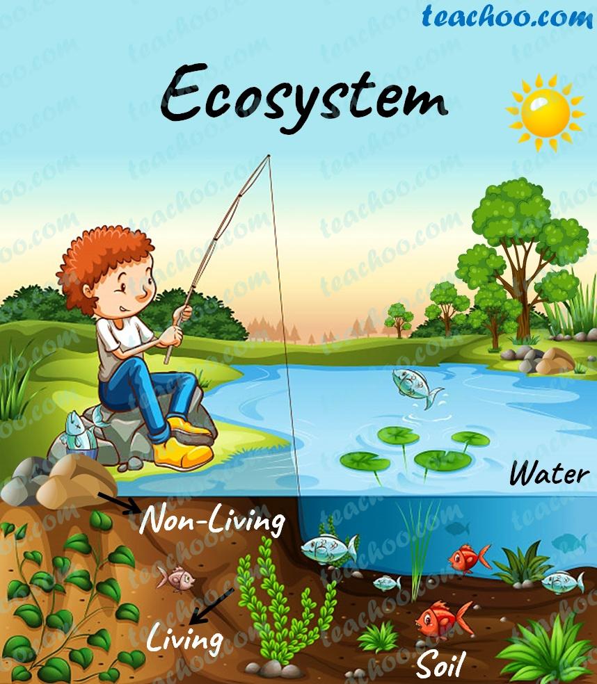 ecosystem---teachoo.jpg