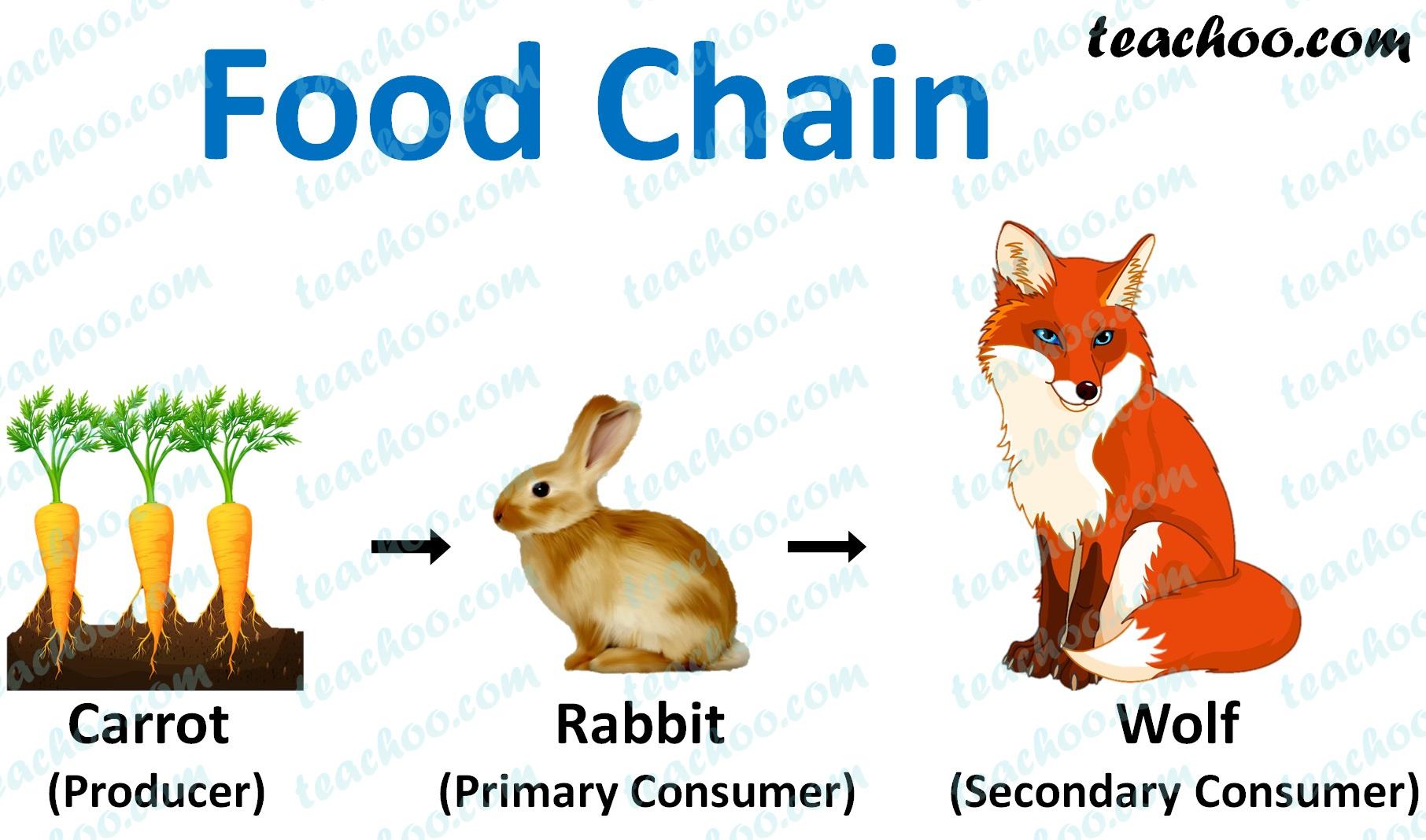 food-chain-ncert-q4---teachoo.jpg