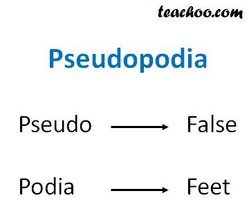 Pseudopodia Meaning.jpg