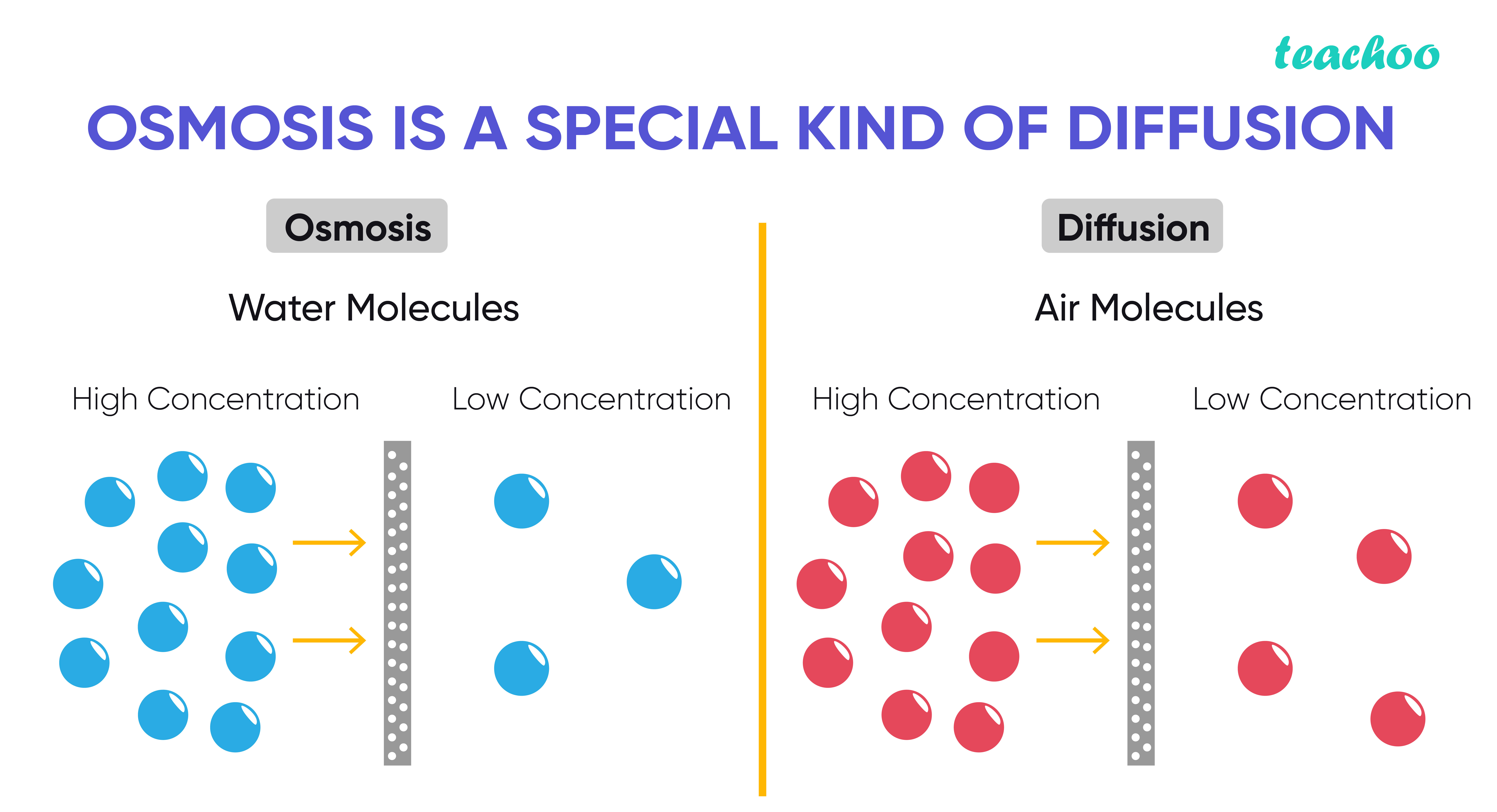 Osmosis is a special kind of diffusion-Teachoo-01.jpg