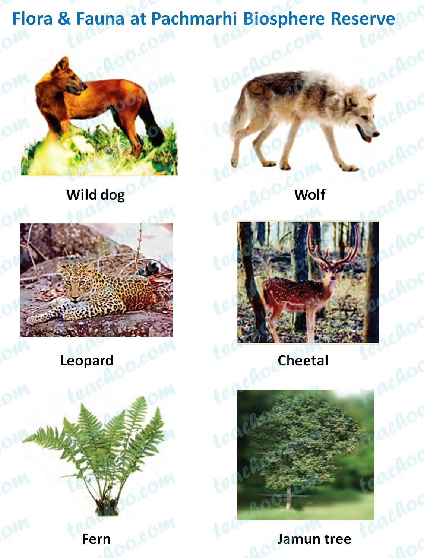 flora-&-fauna-at-pachmarhi-biosphere-reserve.jpg