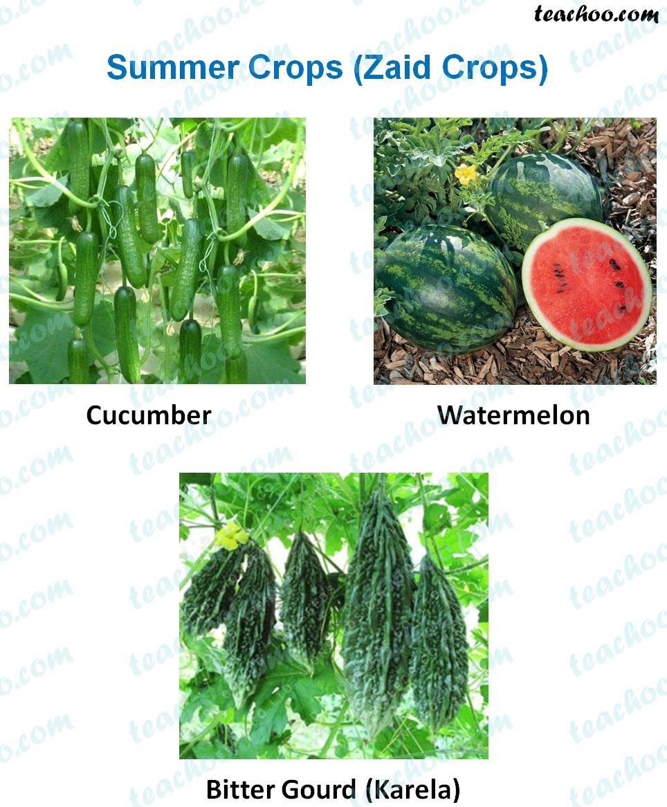 summer-crops-(zaid-crops)---examples.jpg