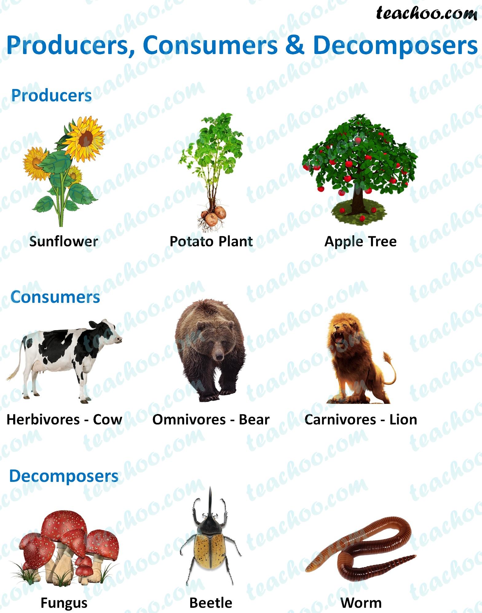 producers,-consumers-&-decomposers-example---teachoo.jpg