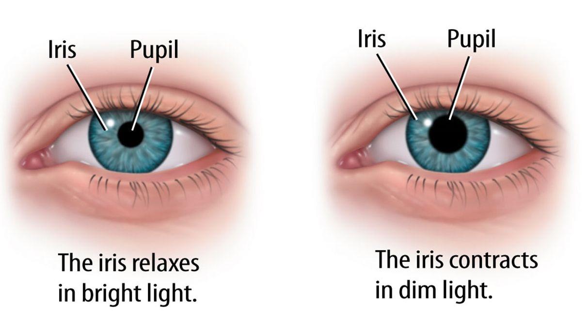 Function of Iris in dim and bright light - Teachoo.jpg