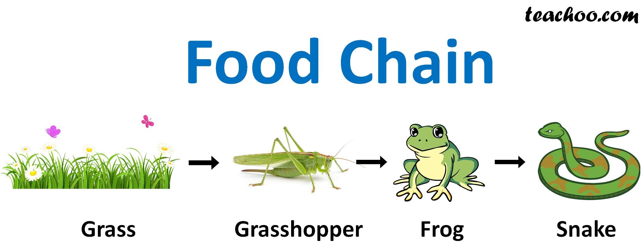 Food Chain Q1 Page 260 - Teachoo.jpg