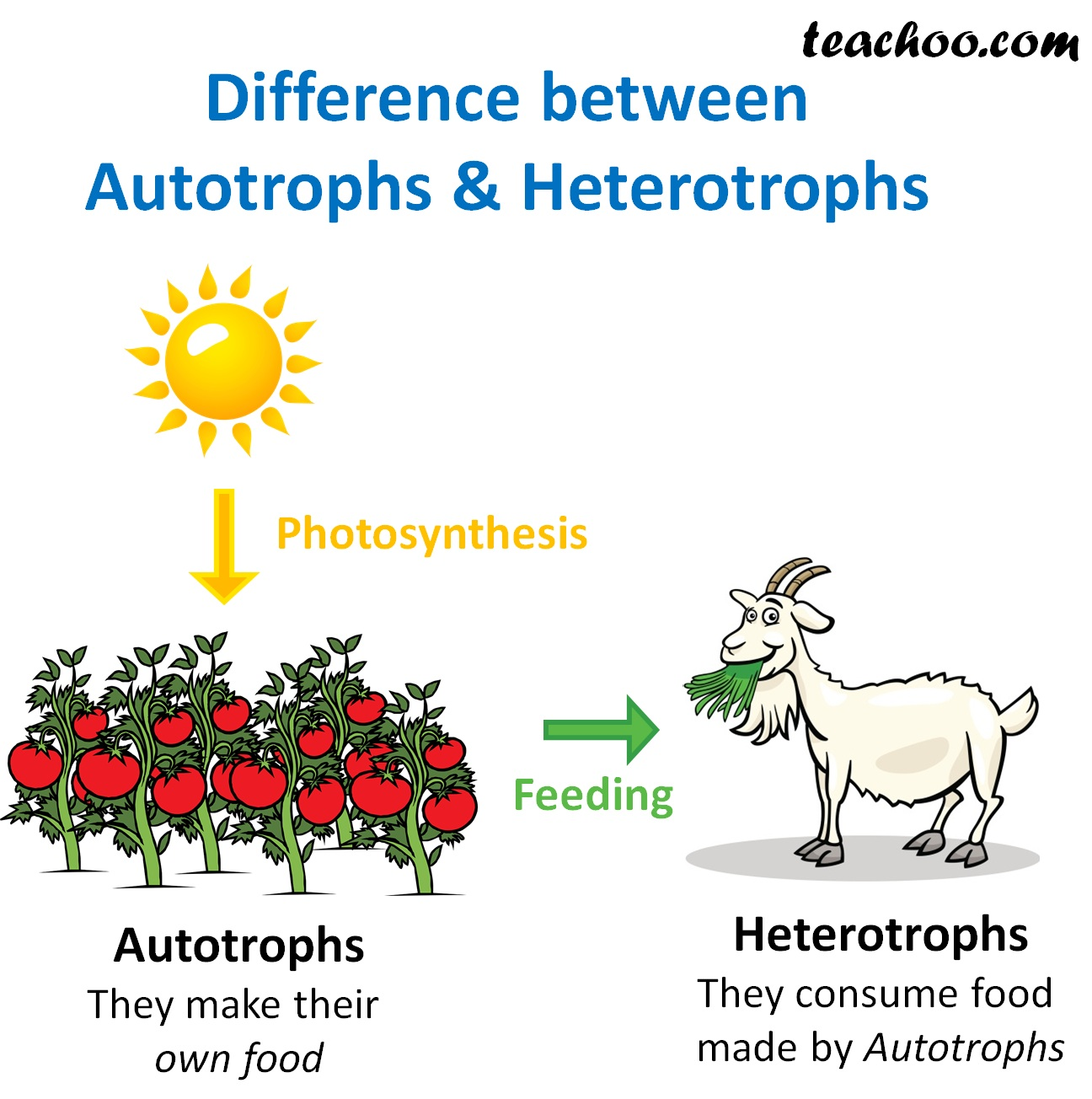 Difference between Autotrophs and Hetrotrophs - Teachoo.jpg