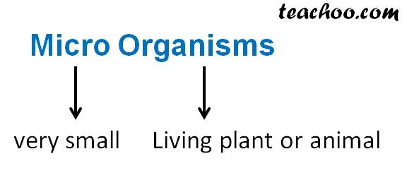 Microorganisms Meaning.jpg