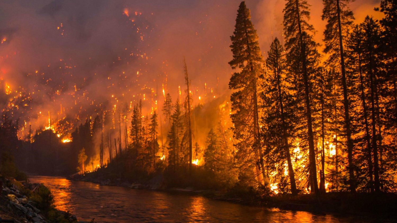 Forest Fires.jpg