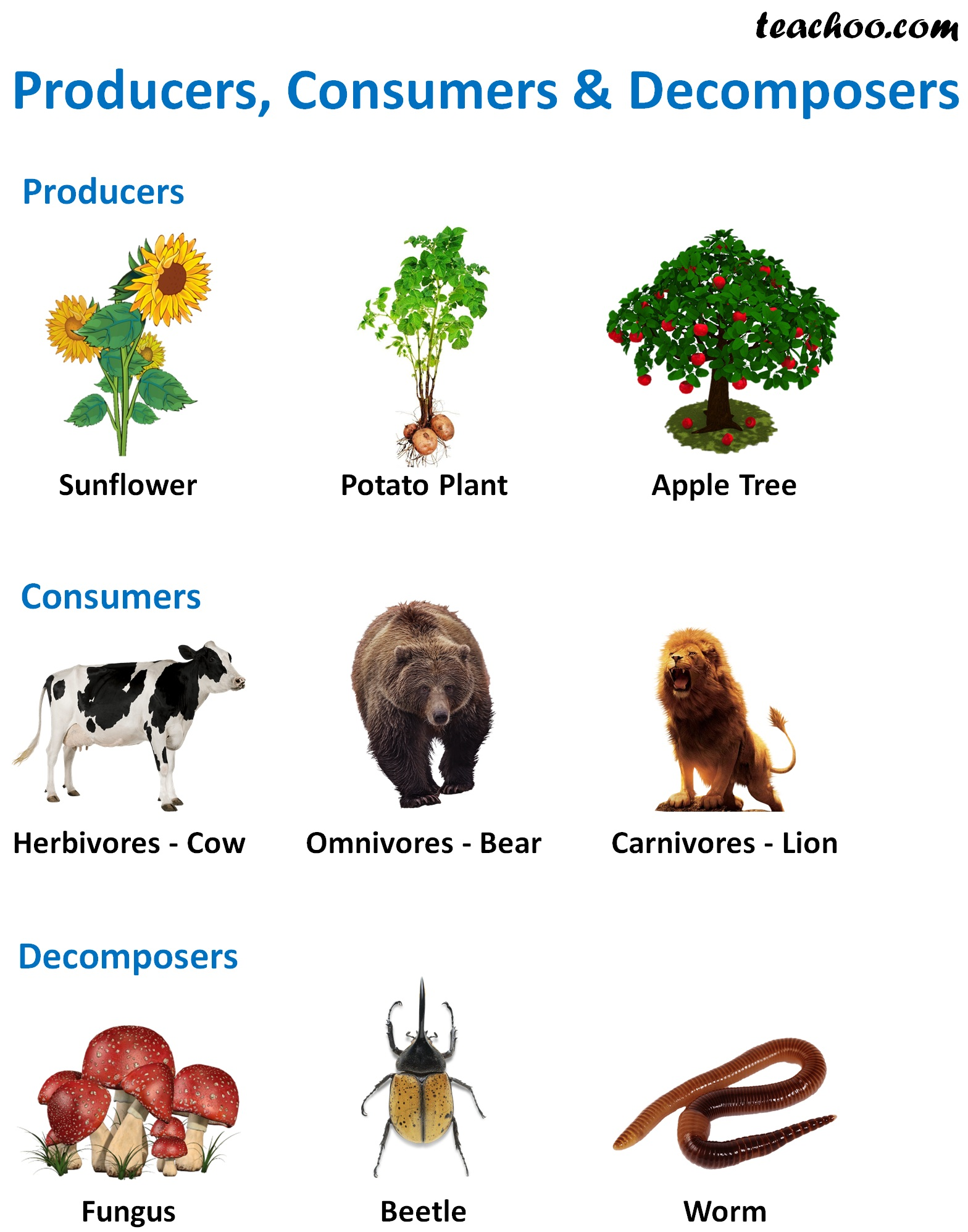 Producers, Consumers & Decomposers Example - Teachoo.jpg