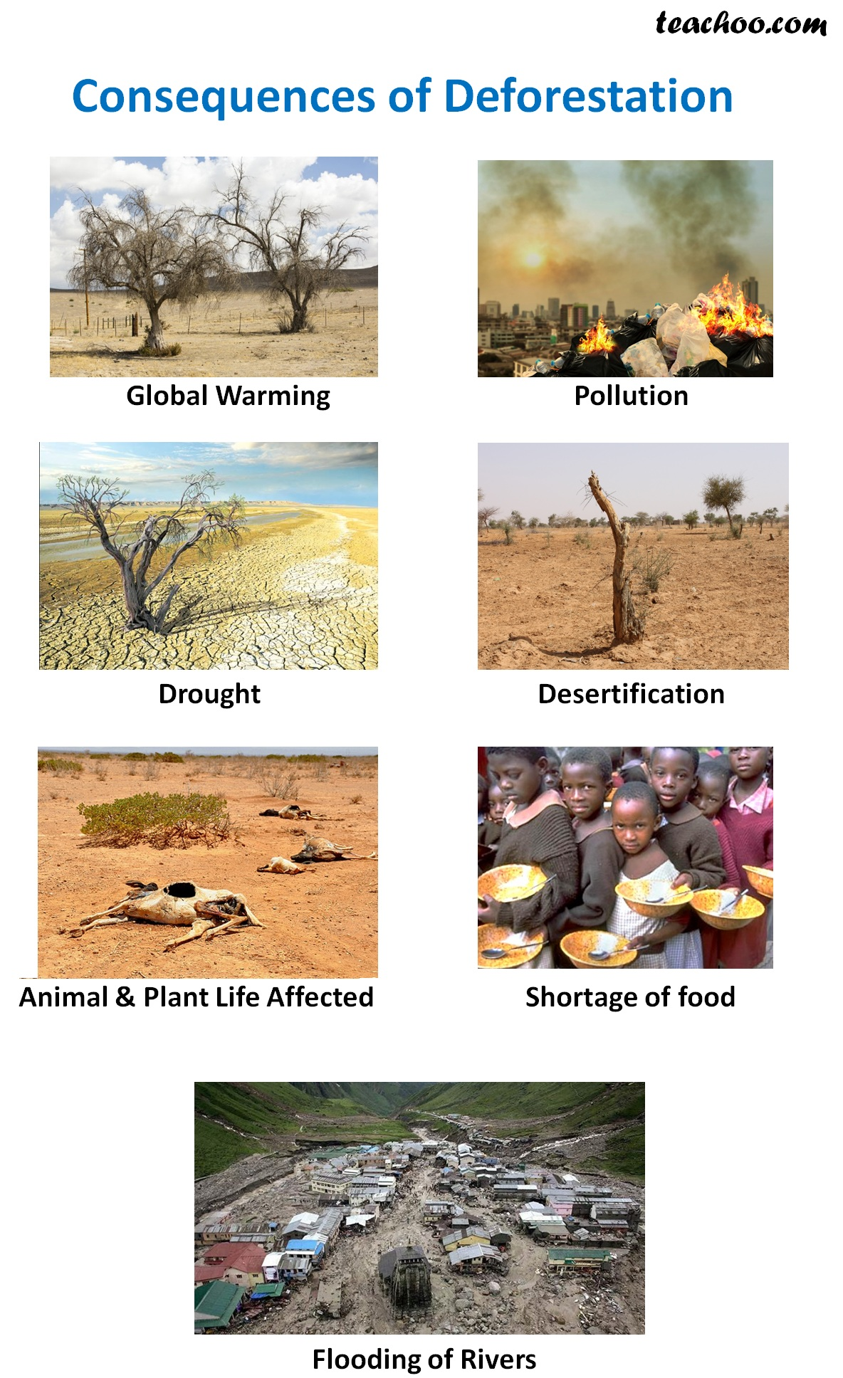 Consequences of Deforestation - Teachoo.jpg