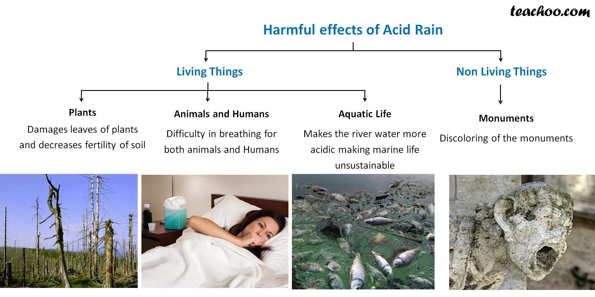 Harmful Effects of Acid Rain - Teachoo.jpg
