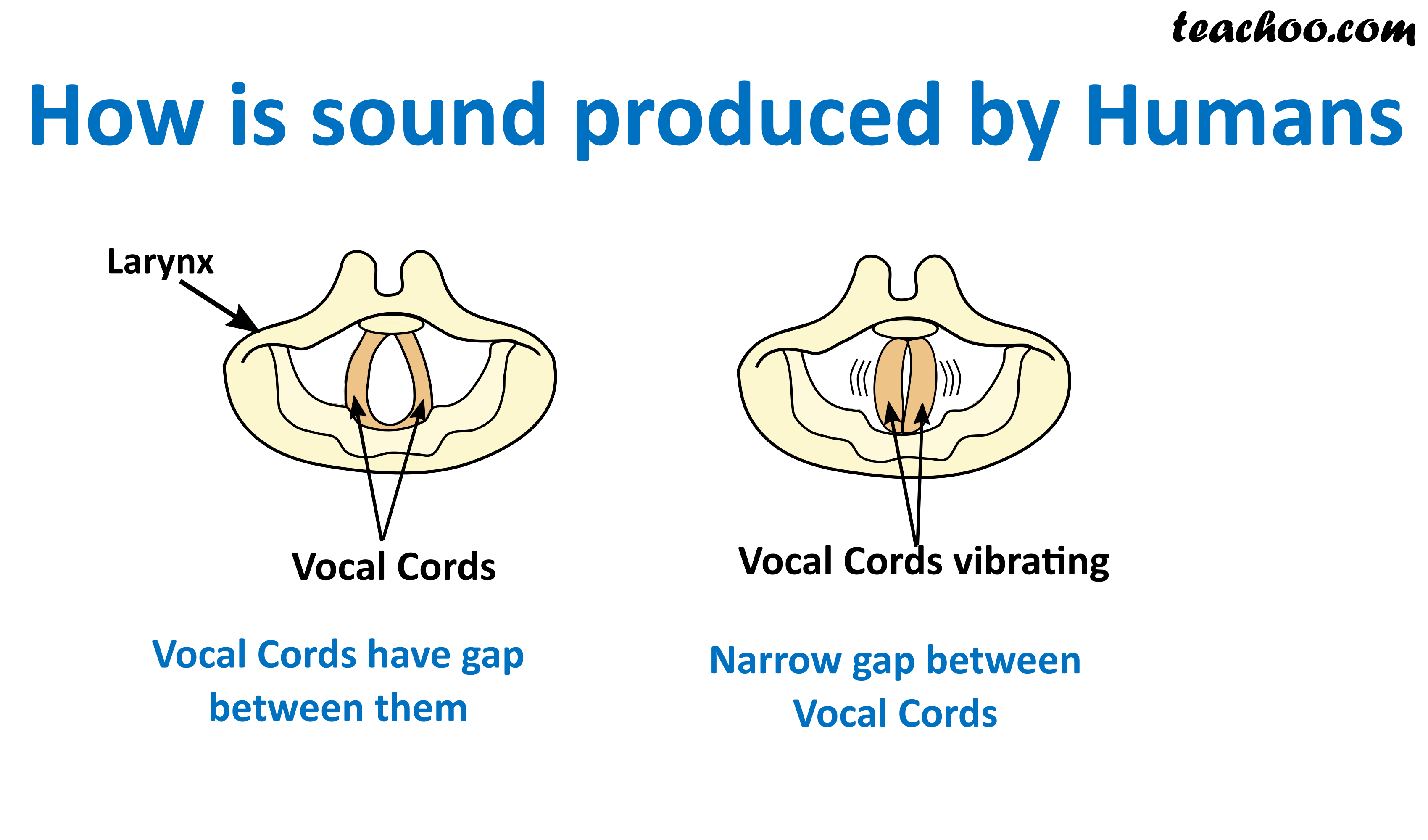 How is sound produced by humans.png