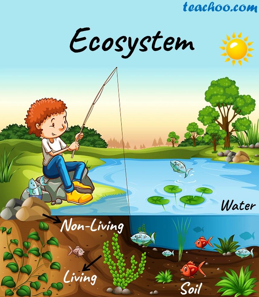 Ecosystem - Teachoo.jpg