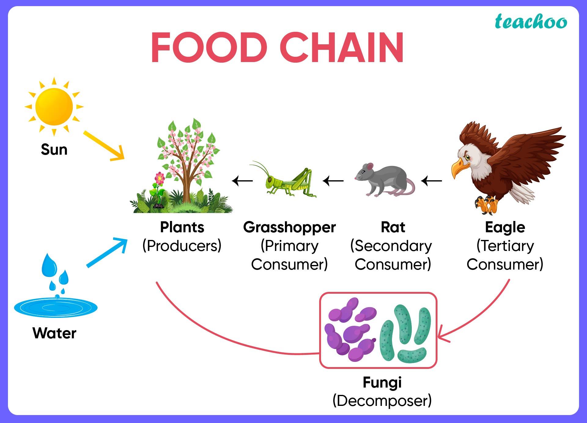 Food Chain-Teachoo-01.jpg