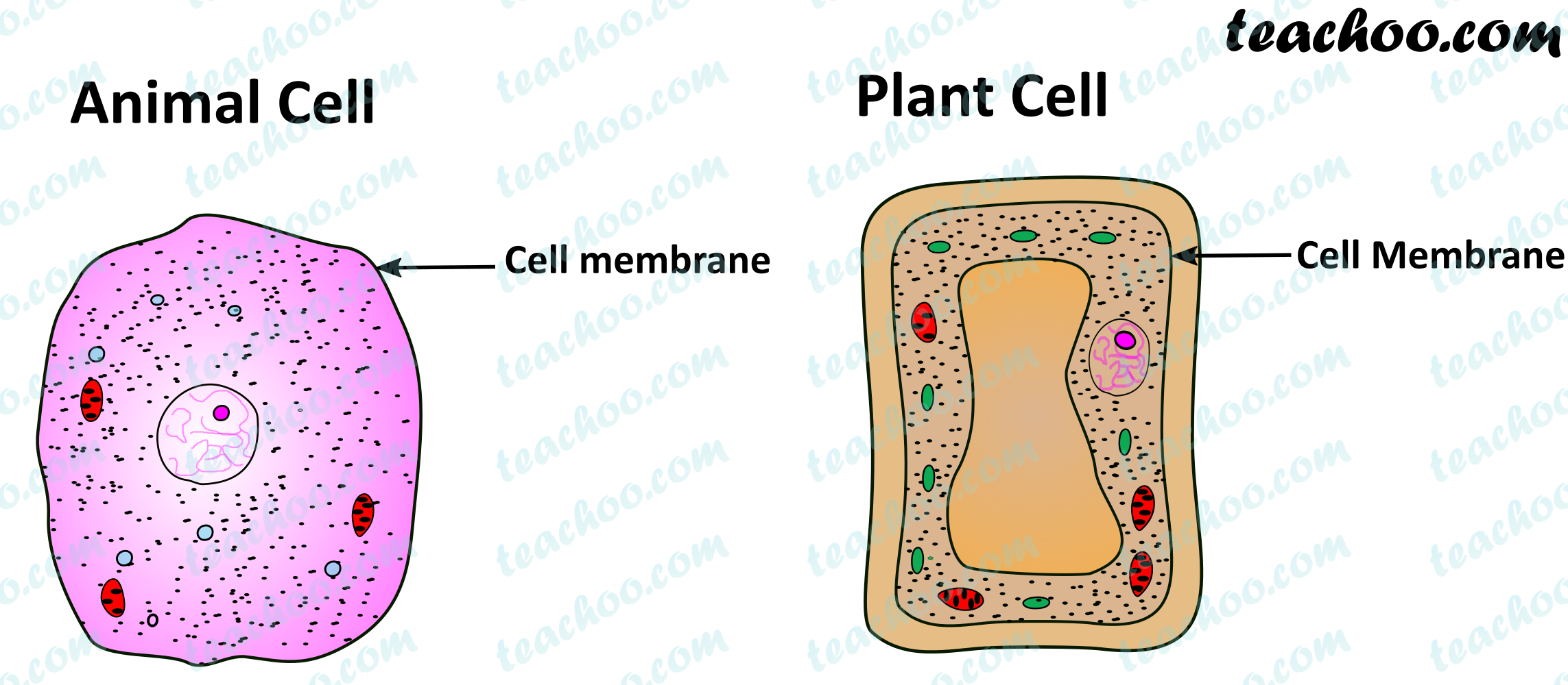 plant-and-animal-cell-only-cell-membrane.png