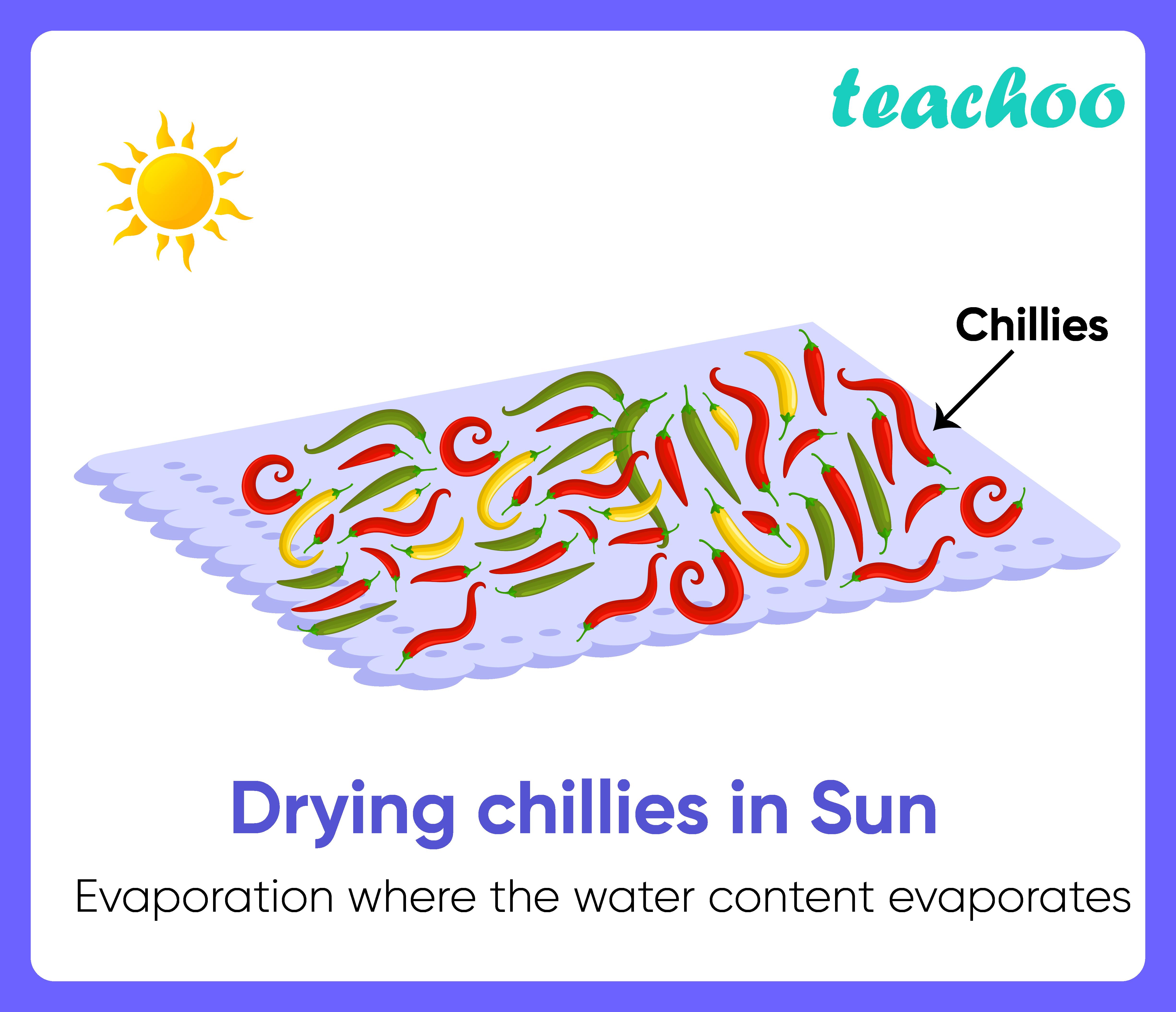 Drying chillies in Sun-Teachoo.png