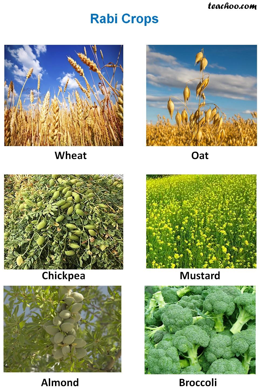 Rabi crops - Examples.jpg