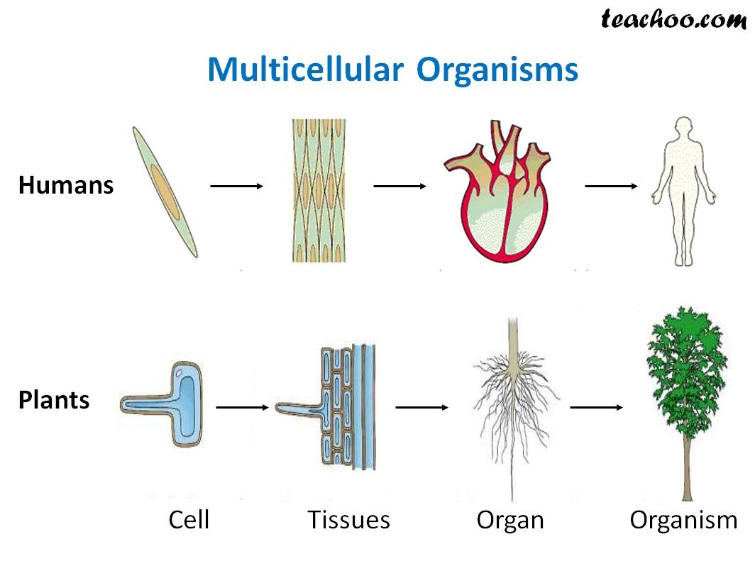 Multicellular Organisms animal and Plants - Teachoo.jpg