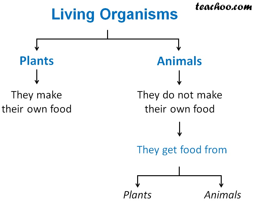 Different Living Organisms and How they get their food.jpg
