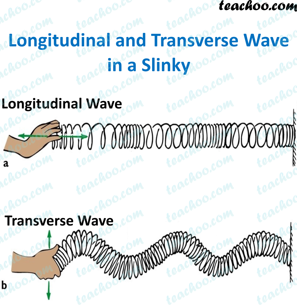 transverse-and-longitudanal-wave.png