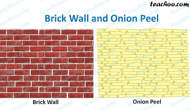 brick-wall-and-onion-peel---teachoo.jpg