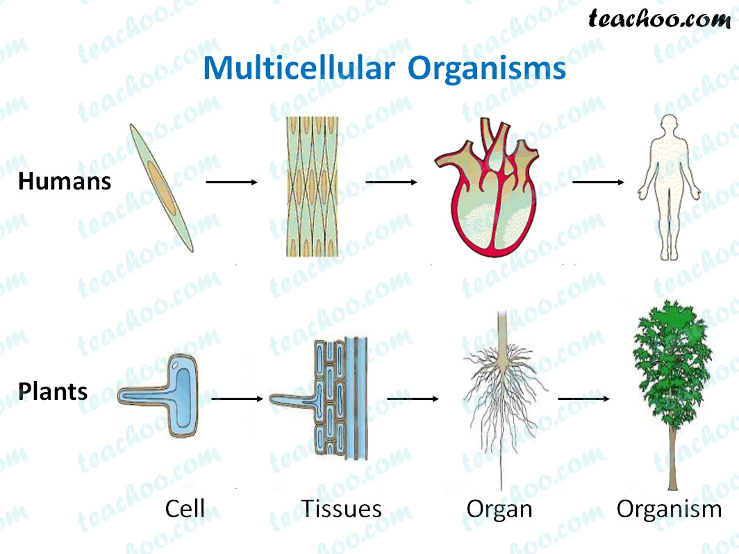 multicellular-organisms-animal-and-plants---teachoo.jpg
