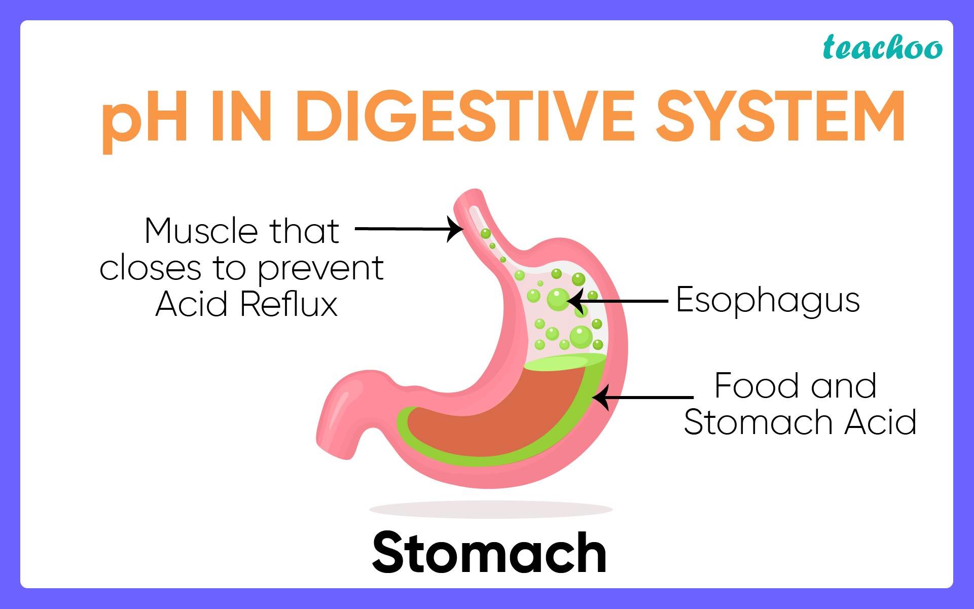 pH in Digestive System-Teachoo.jpg