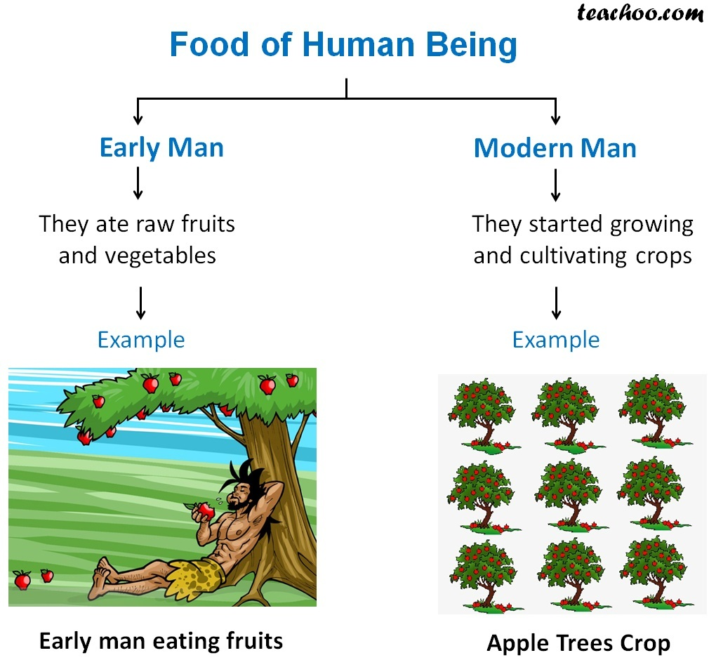 Difference in Foods of Human Being -Early Man, Modern Man.jpg