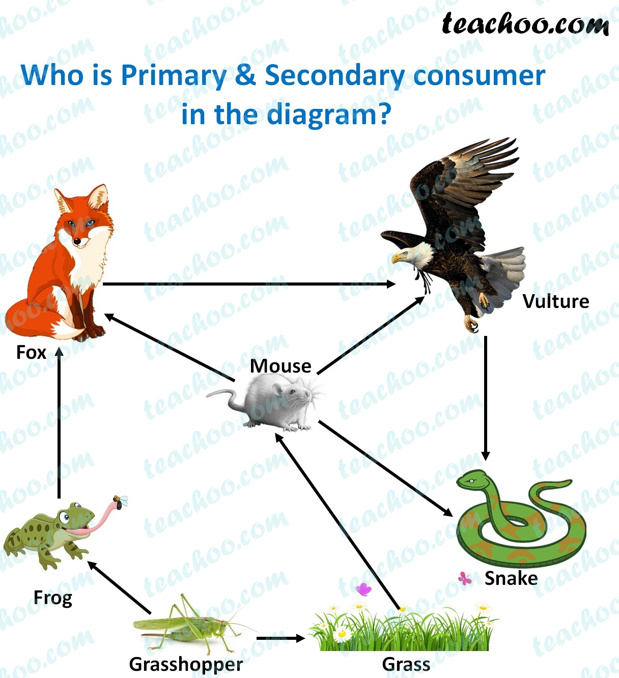 who-are-primary-&-secondary-consumers-in-this-diagram---teachoo.jpg