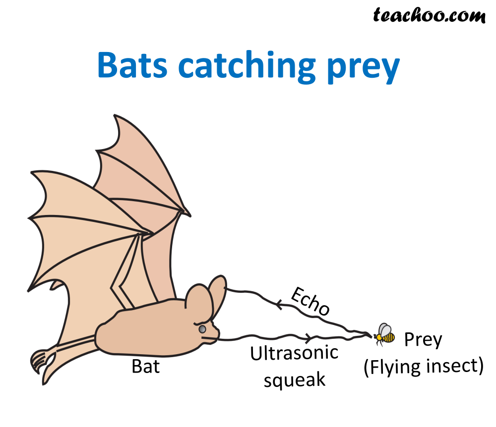 Bats catching prey.png
