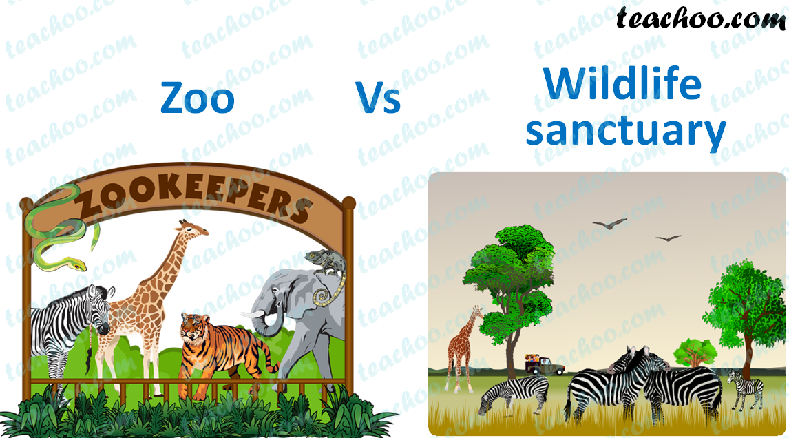 zoo-vs-wildlife-sanctuary---teachoo.png
