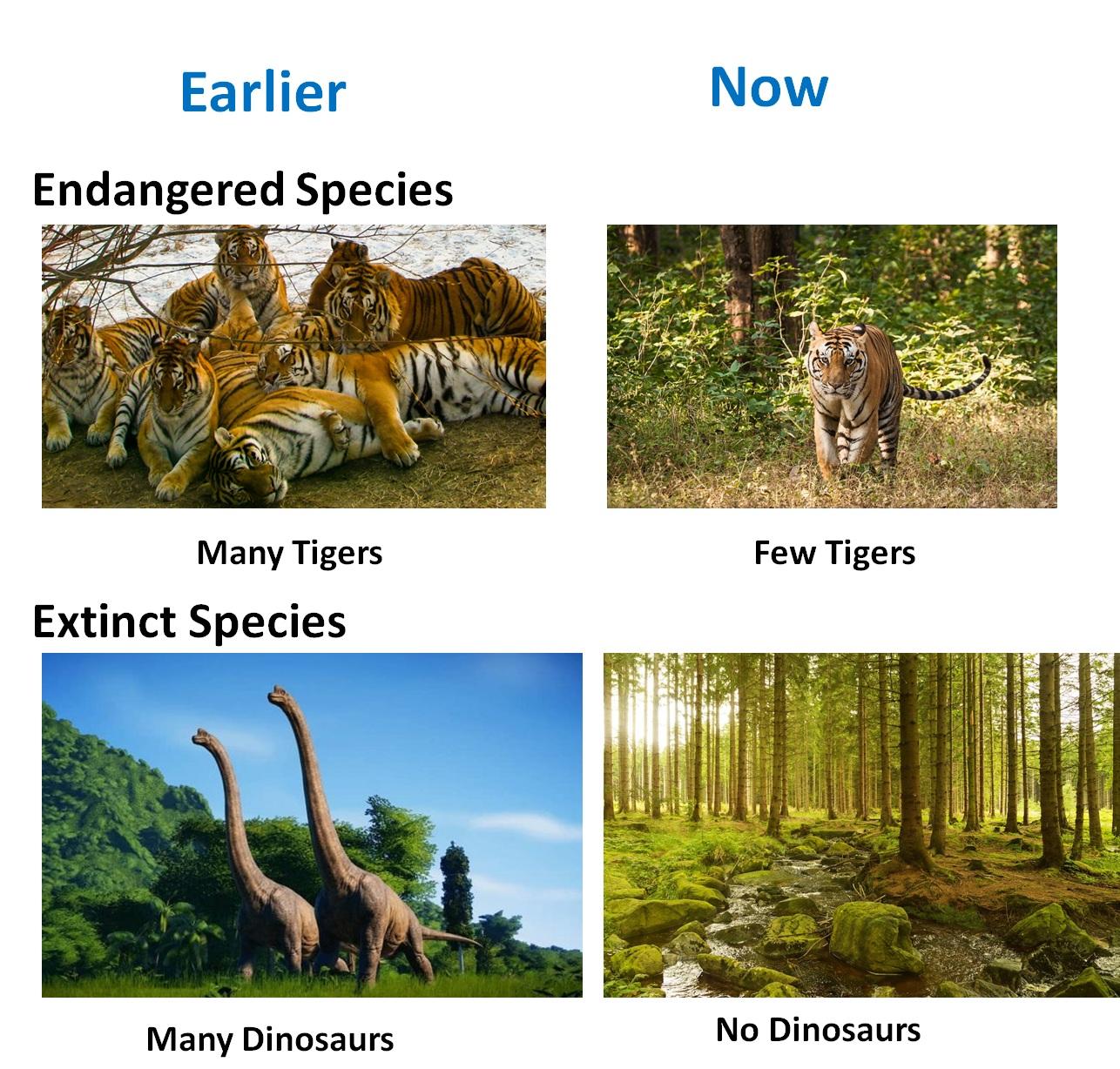 Extinct and Endangered Species - Teachoo.jpg